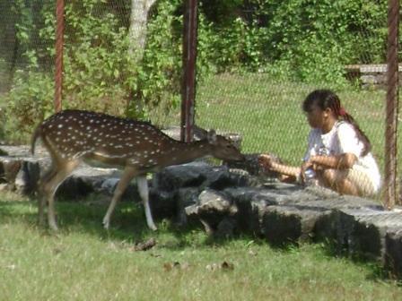 sejumlah rusa (kijang?) tutul dapat kita jumpai di taman ini. taman wisata ini juga menyelenggarakan kegiatan wisata tracking dan camping.